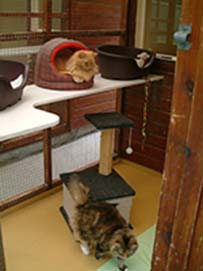 cattery-double