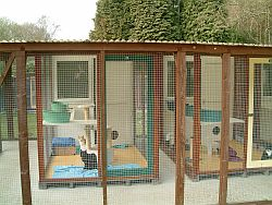 cattery9